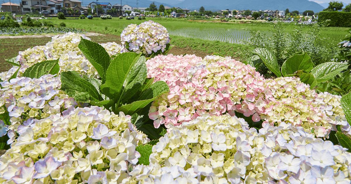 神奈川県開成町