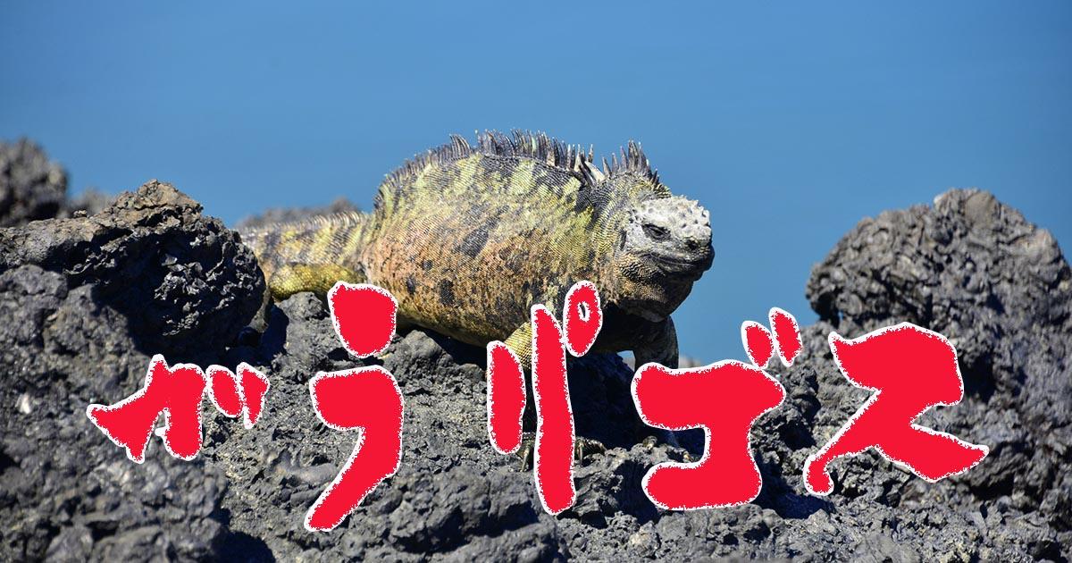 あなたにおすすめの旅行地はガラパゴス諸島です!